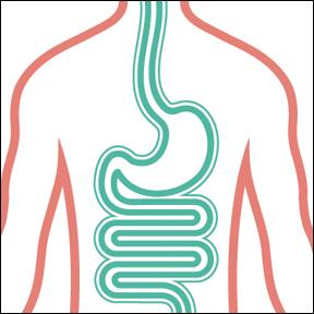 DigestiveEnzymes