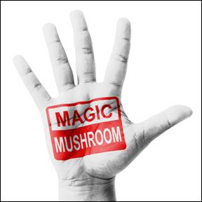 MagicMusroom