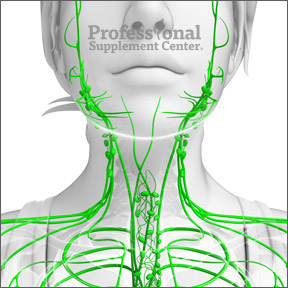 LymphaticSystem