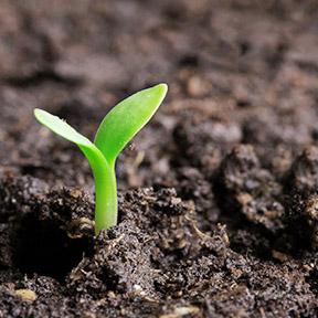 SoilPlants