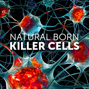 Natural Born Killer cells